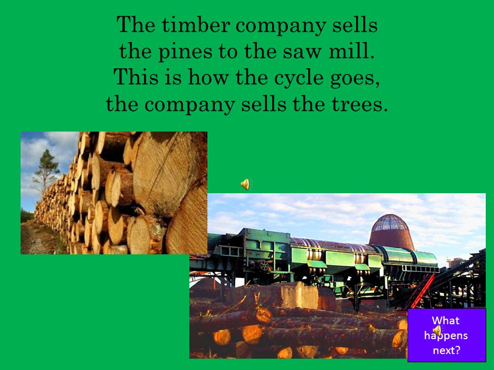 The timber company cuts the trees growing straight and tall This is how the cycle goes, the company cuts the trees. What happens next?