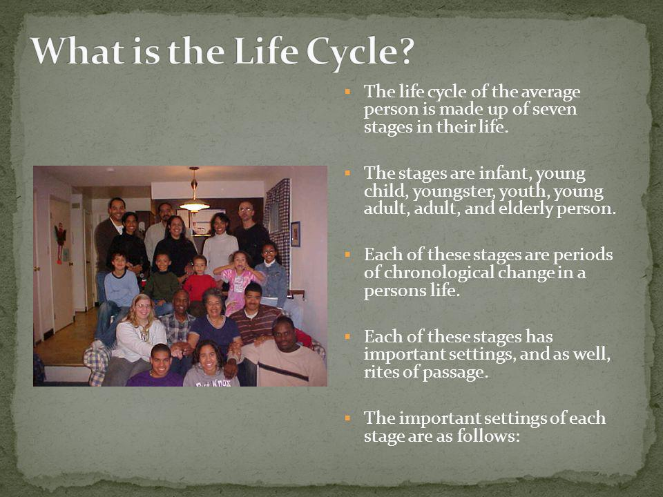 The life cycle of the average person is made up of seven stages in their life.