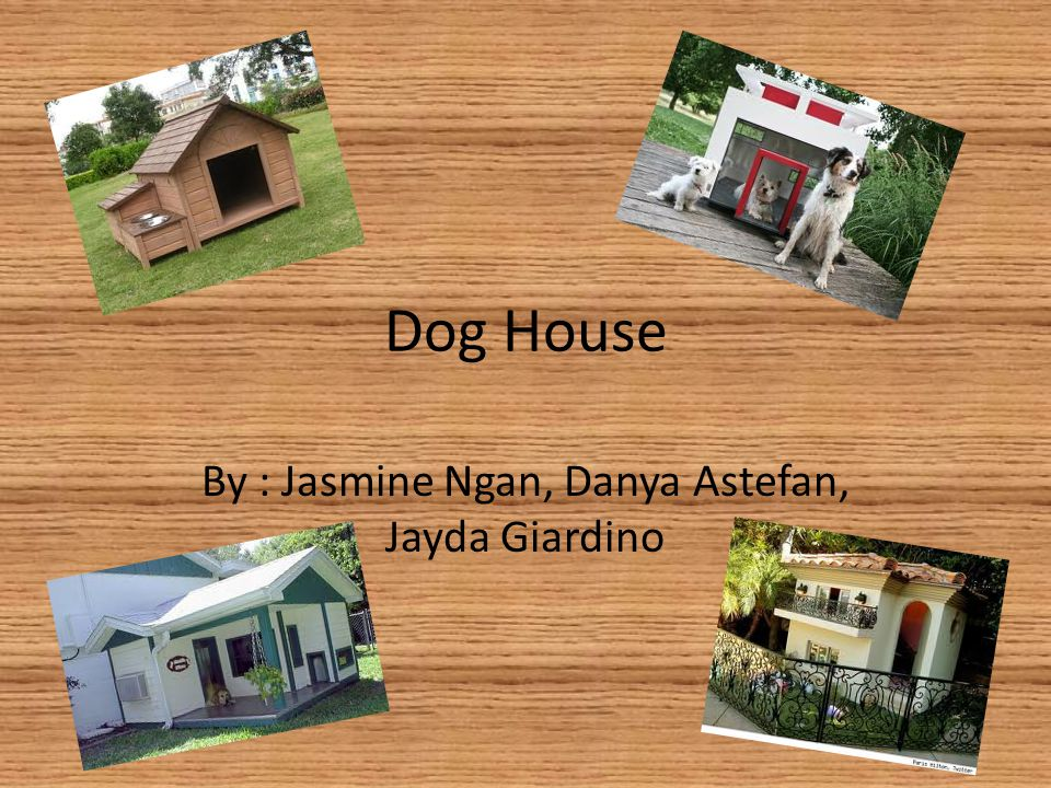 Dog House By : Jasmine Ngan, Danya Astefan, Jayda Giardino