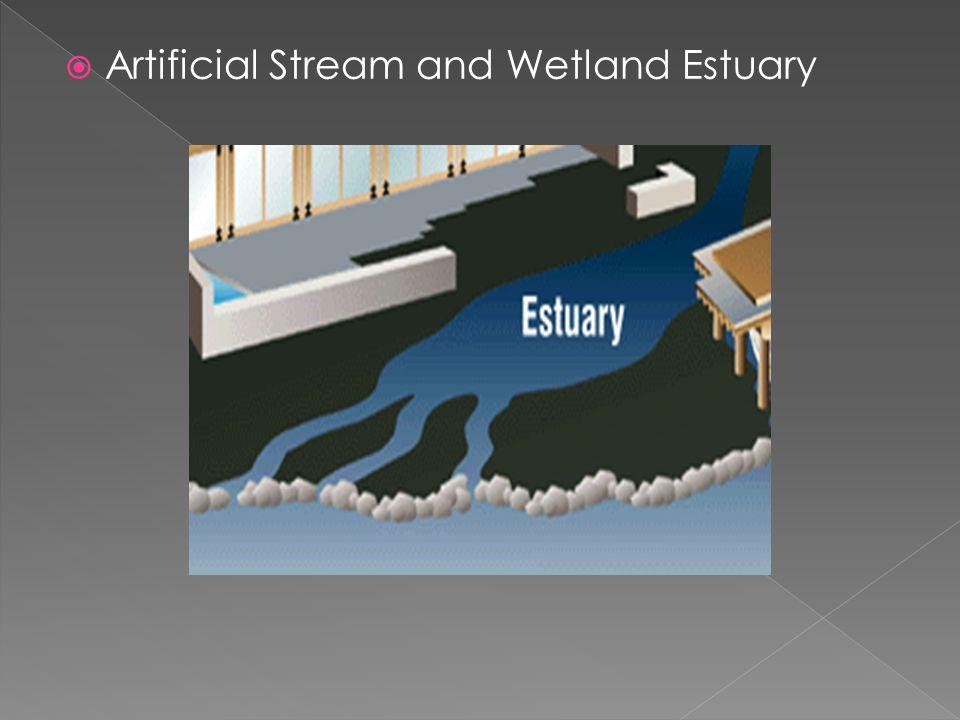 Artificial Stream and Wetland Estuary