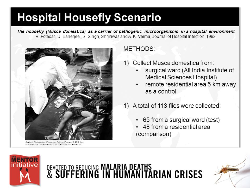 Hospital Housefly Scenario METHODS: 1)Collect Musca domestica from: surgical ward (All India Institute of Medical Sciences Hospital) remote residential area 5 km away as a control 1)A total of 113 flies were collected: 65 from a surgical ward (test) 48 from a residential area (comparison) The housefly (Musca domestica) as a carrier of pathogenic microorganisms in a hospital environment R.