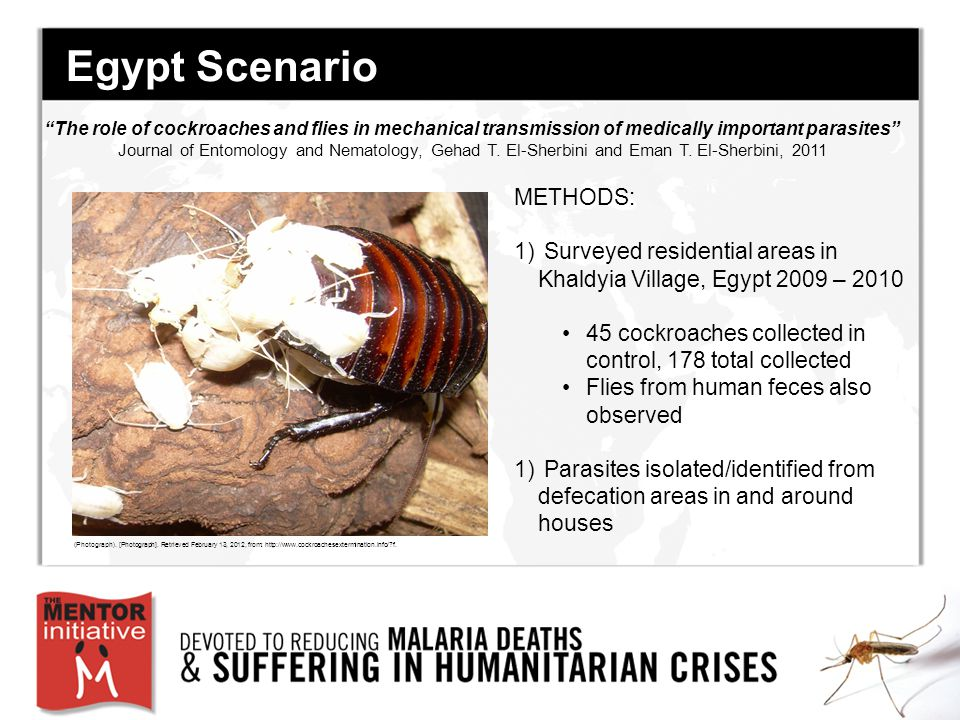 Egypt Scenario METHODS: 1) Surveyed residential areas in Khaldyia Village, Egypt 2009 – 2010 45 cockroaches collected in control, 178 total collected Flies from human feces also observed 1) Parasites isolated/identified from defecation areas in and around houses The role of cockroaches and flies in mechanical transmission of medically important parasites Journal of Entomology and Nematology, Gehad T.