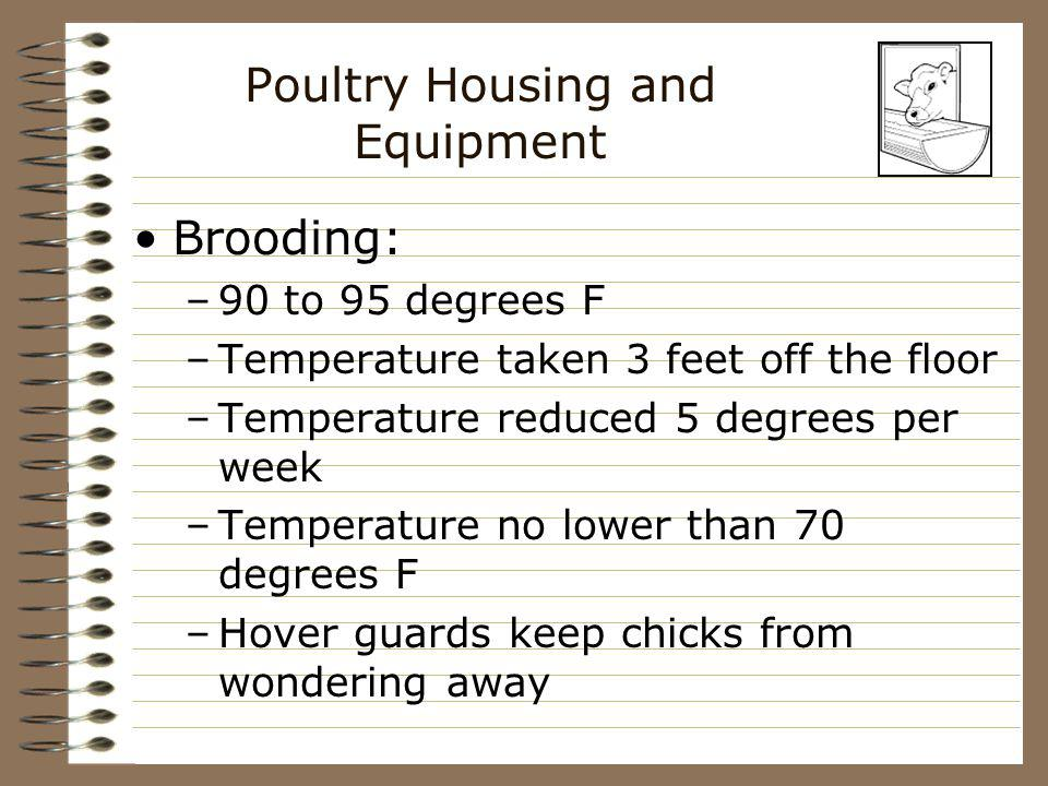 Poultry Housing and Equipment Brooding: –90 to 95 degrees F –Temperature taken 3 feet off the floor –Temperature reduced 5 degrees per week –Temperatu