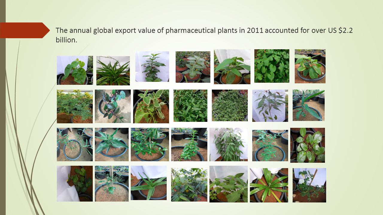 The annual global export value of pharmaceutical plants in 2011 accounted for over US $2.2 billion.