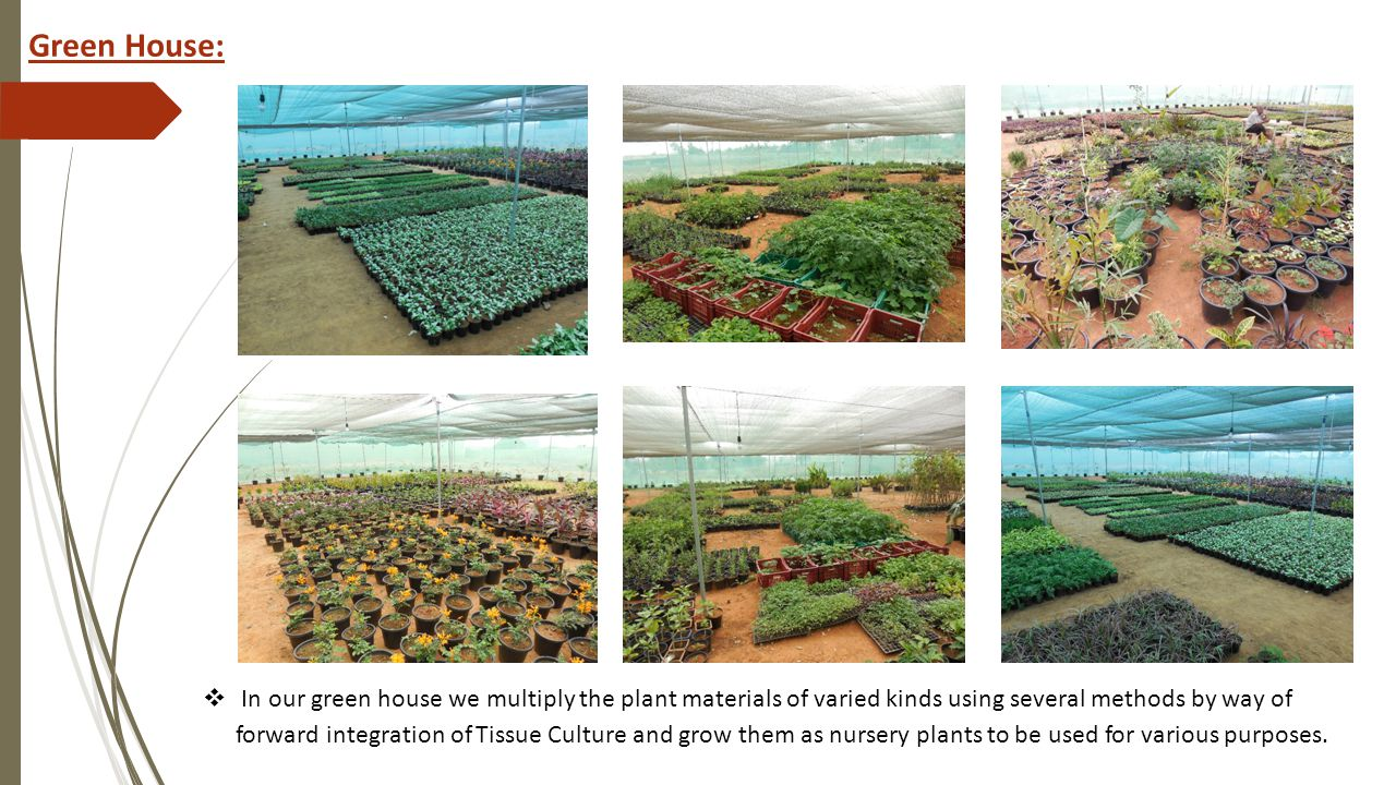 In our green house we multiply the plant materials of varied kinds using several methods by way of forward integration of Tissue Culture and grow them as nursery plants to be used for various purposes.