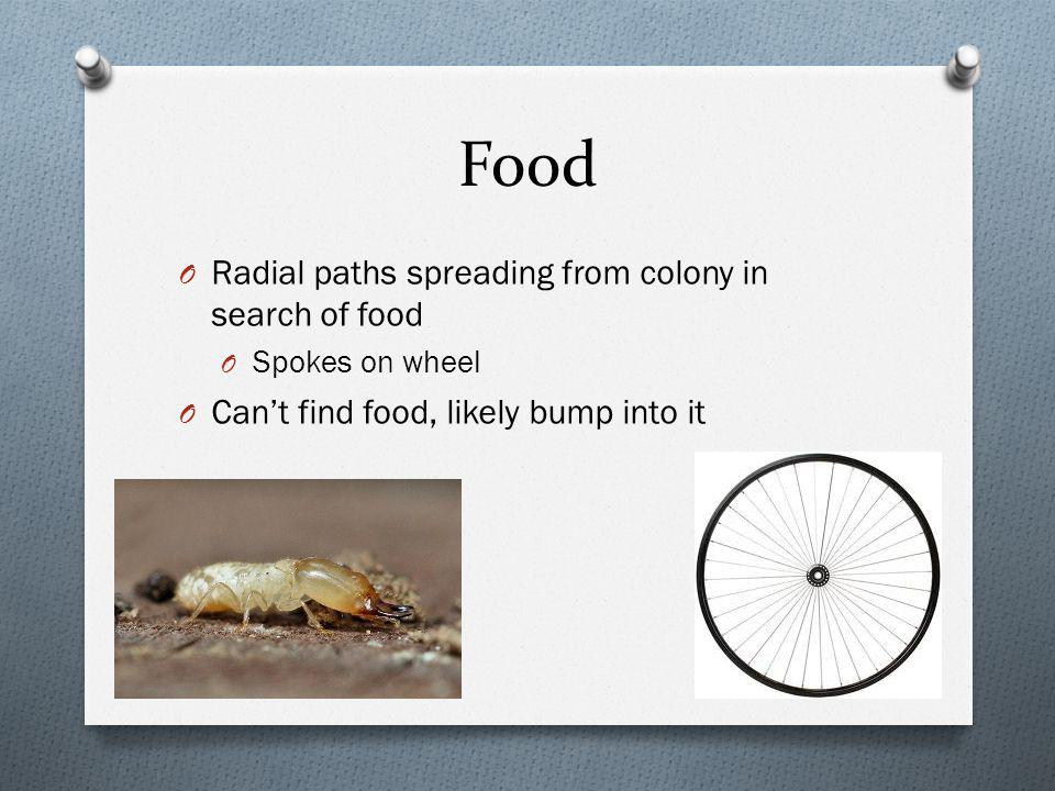 Food O Radial paths spreading from colony in search of food O Spokes on wheel O Cant find food, likely bump into it