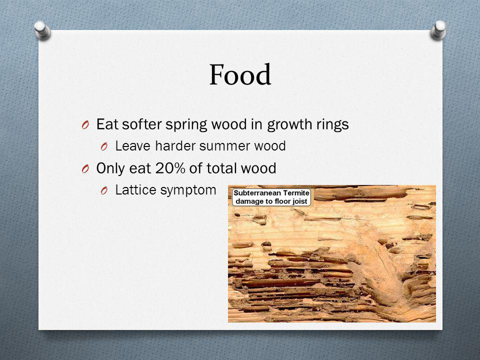 Food O Eat softer spring wood in growth rings O Leave harder summer wood O Only eat 20% of total wood O Lattice symptom