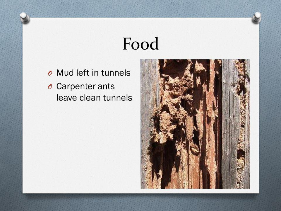 Food O Mud left in tunnels O Carpenter ants leave clean tunnels
