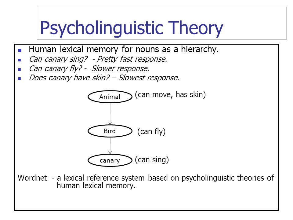 Psycholinguistic Theory Human lexical memory for nouns as a hierarchy. Can canary sing? - Pretty fast response. Can canary fly? - Slower response. Doe