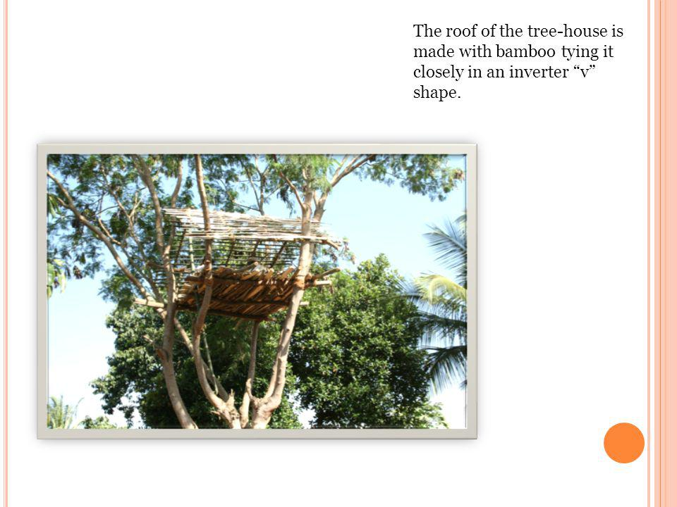The roof of the tree-house is made with bamboo tying it closely in an inverter v shape.