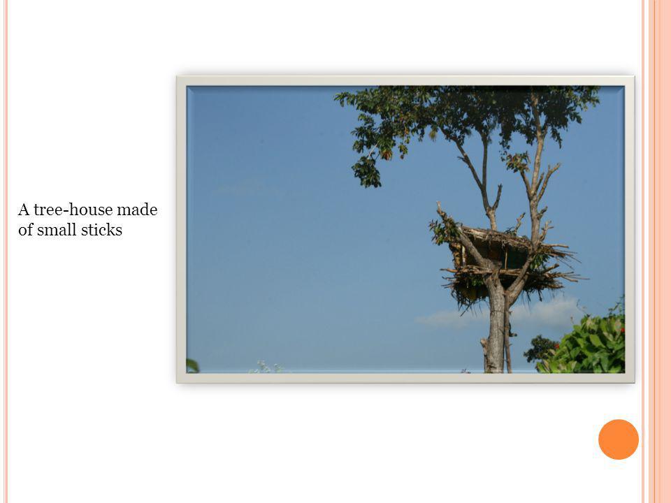 A tree-house made of small sticks