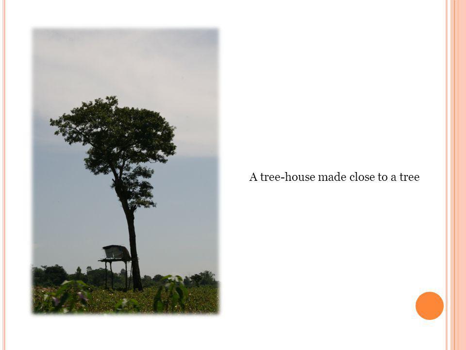A tree-house made close to a tree