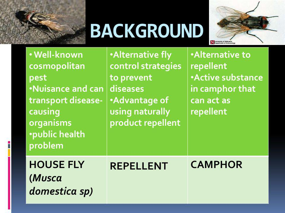 BACKGROUND Well-known cosmopolitan pest Nuisance and can transport disease- causing organisms public health problem Alternative fly control strategies
