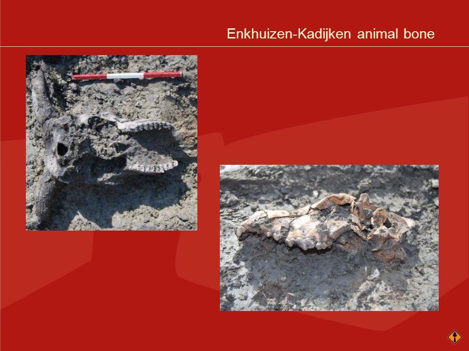Enkhuizen-Kadijken animal bone