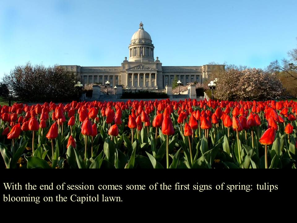 With the end of session comes some of the first signs of spring: tulips blooming on the Capitol lawn.