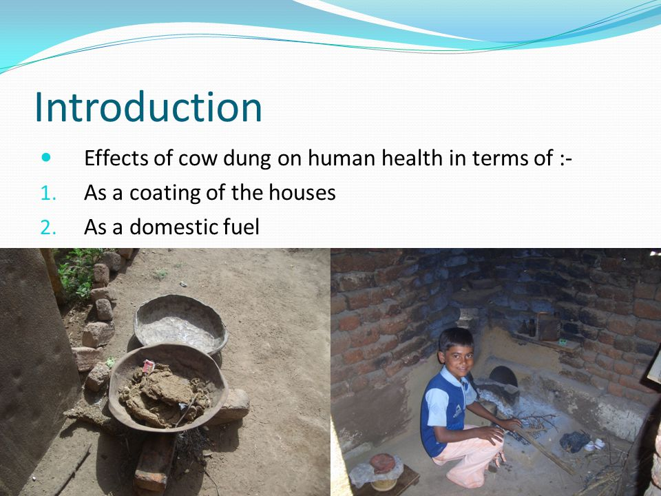 Introduction Effects of cow dung on human health in terms of :- 1.