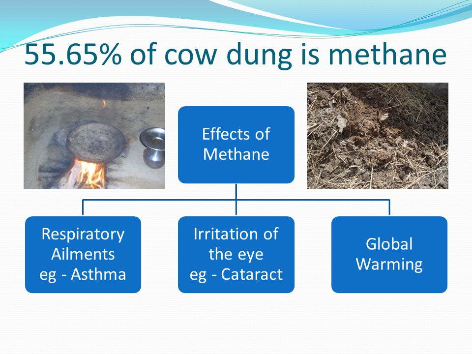 55.65% of cow dung is methane Effects of Methane Respiratory Ailments eg - Asthma Irritation of the eye eg - Cataract Global Warming