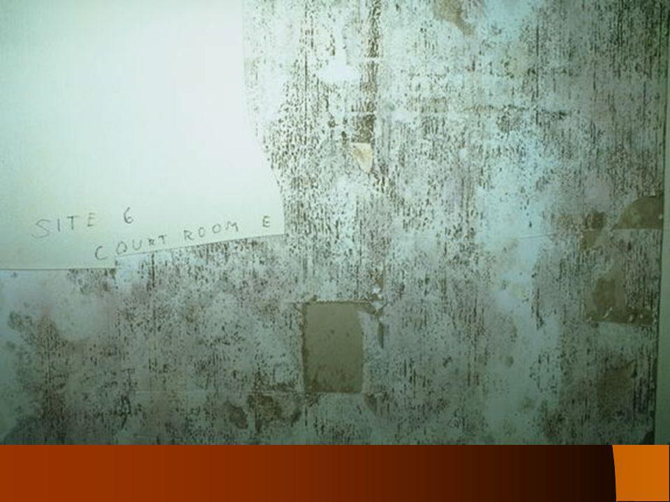 What is Mold Exposure.