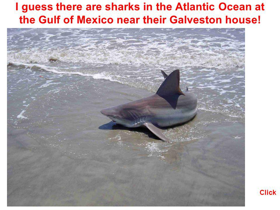 I guess there are sharks in the Atlantic Ocean at the Gulf of Mexico near their Galveston house! Click
