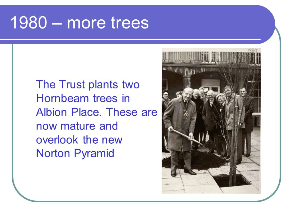 1980 – more trees The Trust plants two Hornbeam trees in Albion Place. These are now mature and overlook the new Norton Pyramid