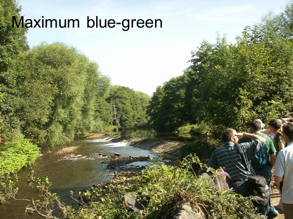 Maximum blue-green