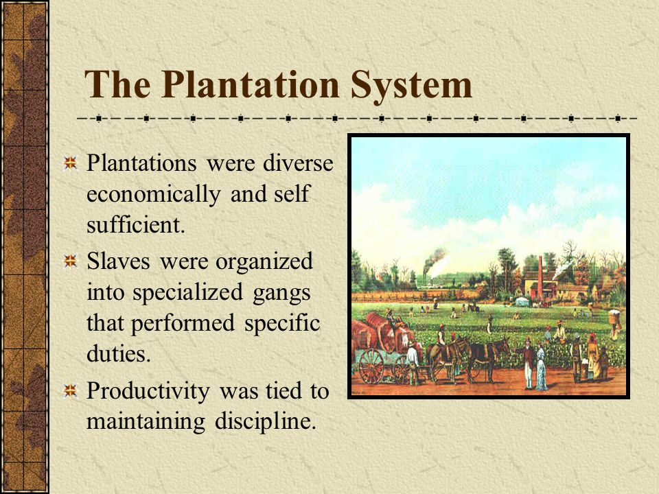 The Plantation System Plantations were diverse economically and self sufficient. Slaves were organized into specialized gangs that performed specific