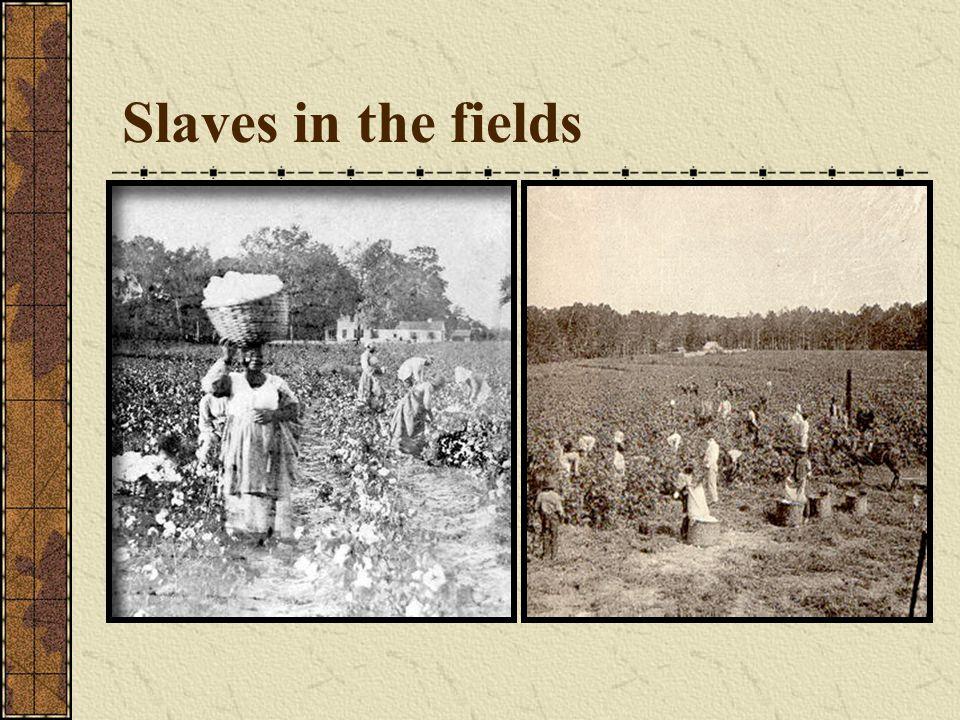 Slaves in the fields