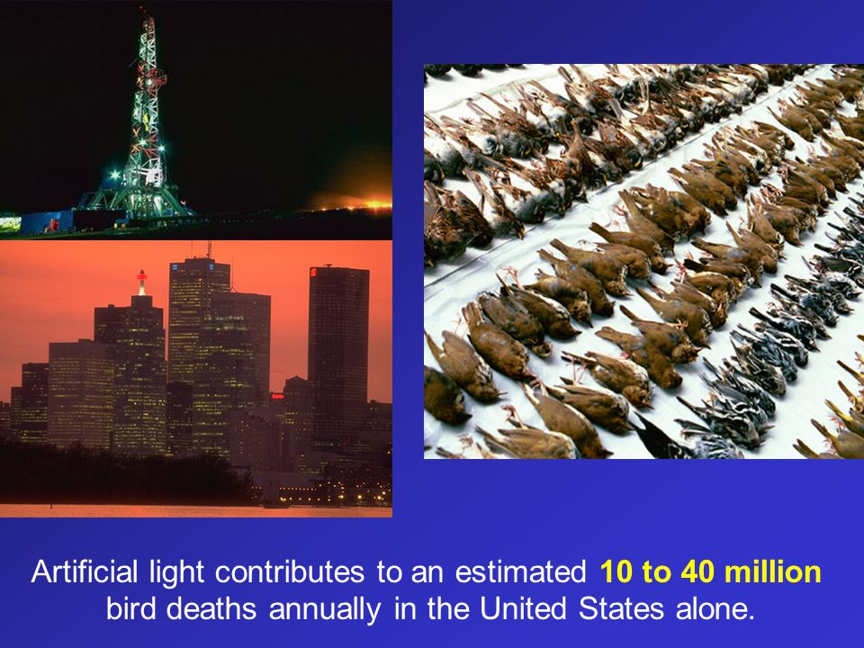 Artificial light contributes to an estimated 10 to 40 million bird deaths annually in the United States alone.