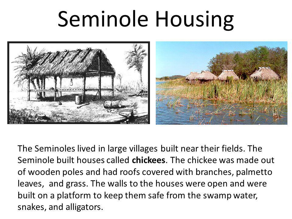 Seminole Housing The Seminoles lived in large villages built near their fields. The Seminole built houses called chickees. The chickee was made out of