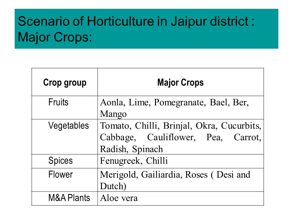 Scenario of Horticulture in Jaipur district : Major Crops: Crop groupMajor Crops Fruits Aonla, Lime, Pomegranate, Bael, Ber, Mango Vegetables Tomato, Chilli, Brinjal, Okra, Cucurbits, Cabbage, Cauliflower, Pea, Carrot, Radish, Spinach Spices Fenugreek, Chilli Flower Merigold, Gailiardia, Roses ( Desi and Dutch) M&A Plants Aloe vera