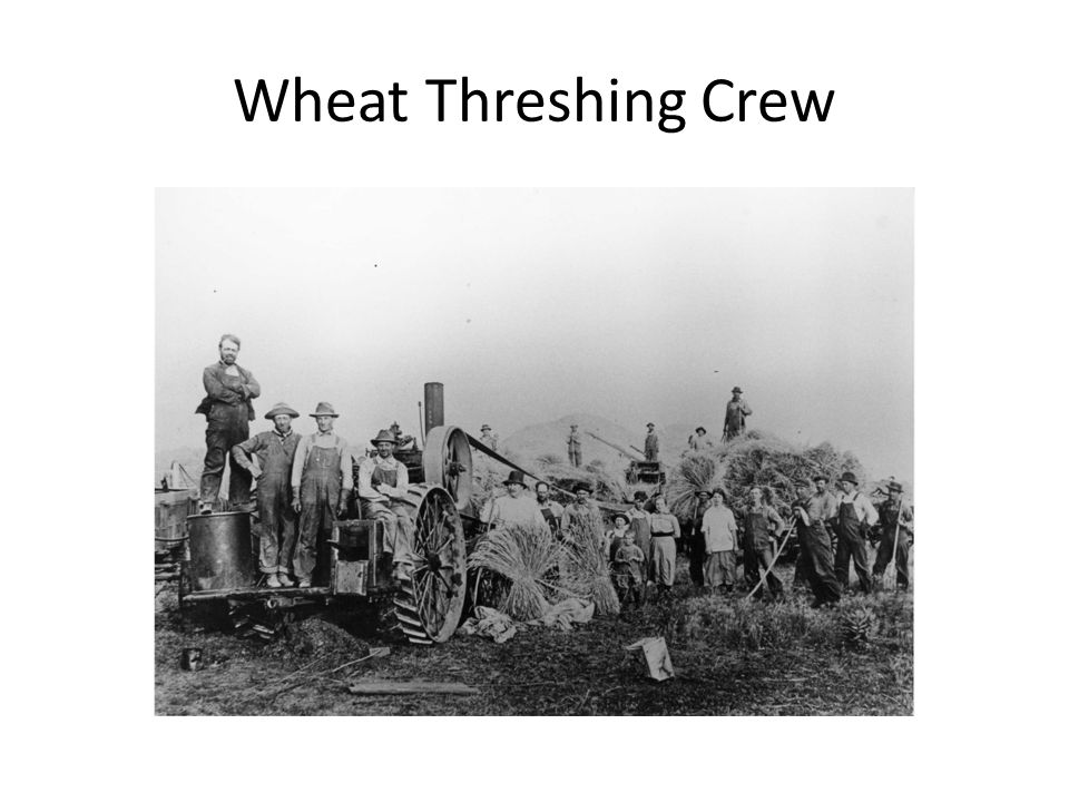 Wheat Threshing Crew