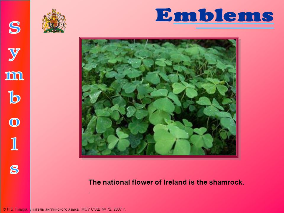 The national flower of Ireland is the shamrock.. © Л.Б.