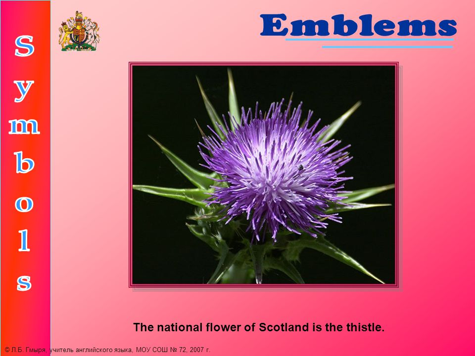 The national flower of Scotland is the thistle. © Л.Б.
