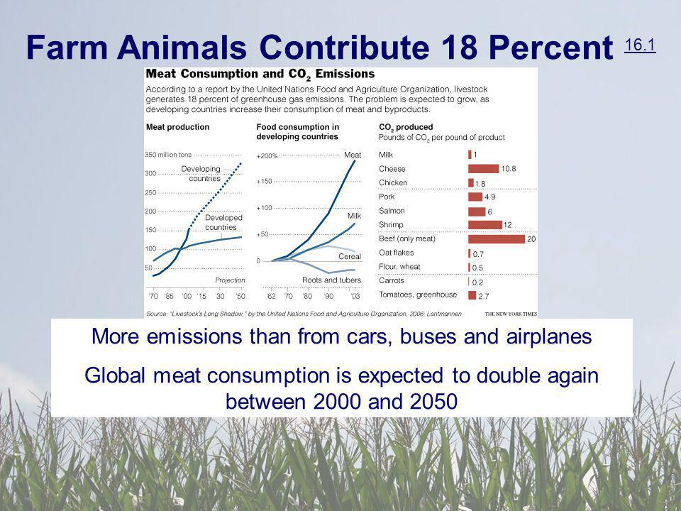 Farm Animals Contribute 18 Percent 16.1 16.1 More emissions than from cars, buses and airplanes Global meat consumption is expected to double again between 2000 and 2050