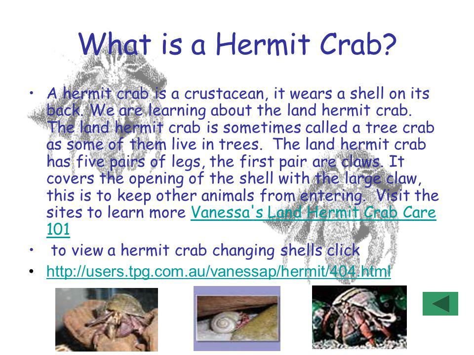 What is a Hermit Crab? A hermit crab is a crustacean, it wears a shell on its back. We are learning about the land hermit crab. The land hermit crab i