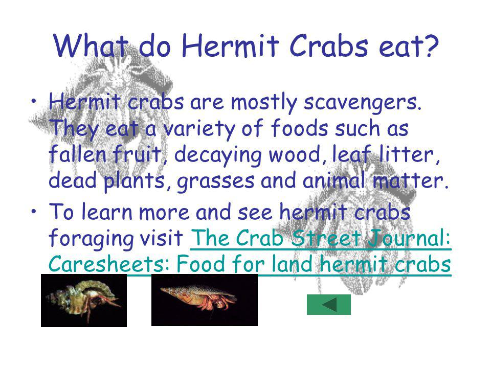 Create a Hermit Crab habitat.To create a habitat, first gather the items you wish to use.