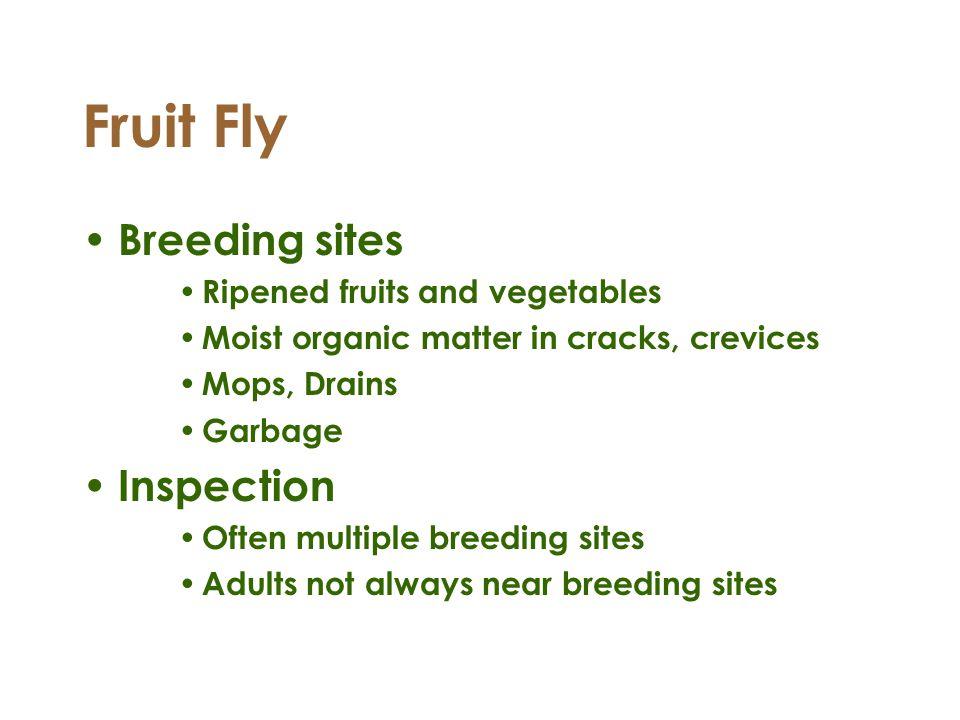 Fruit Fly Breeding sites Ripened fruits and vegetables Moist organic matter in cracks, crevices Mops, Drains Garbage Inspection Often multiple breedin