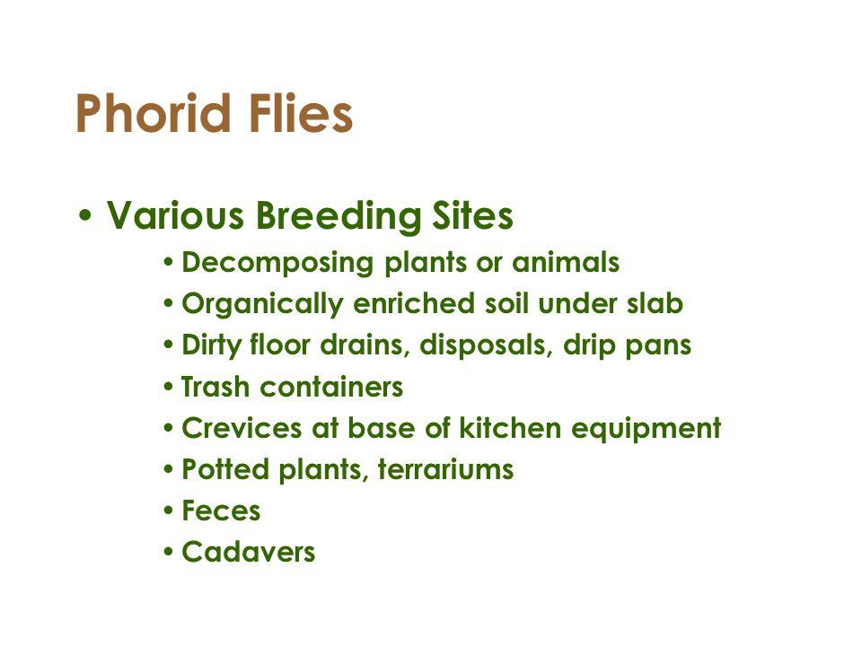 Phorid Flies Various Breeding Sites Decomposing plants or animals Organically enriched soil under slab Dirty floor drains, disposals, drip pans Trash