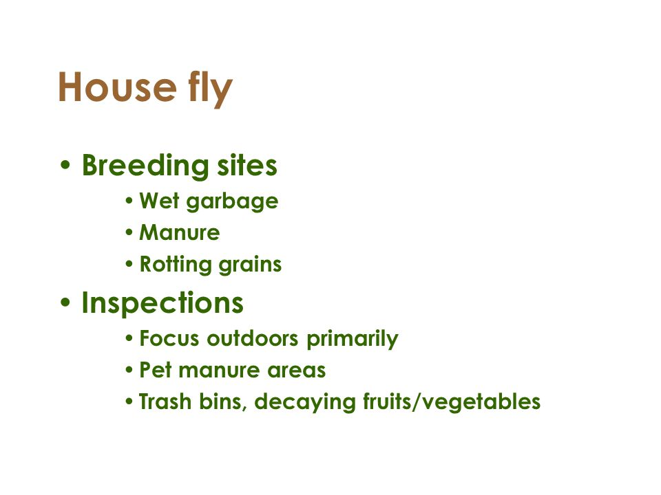House fly Breeding sites Wet garbage Manure Rotting grains Inspections Focus outdoors primarily Pet manure areas Trash bins, decaying fruits/vegetable