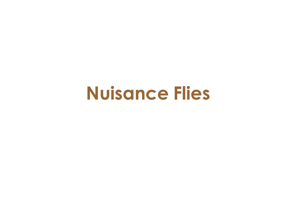 Nuisance Flies