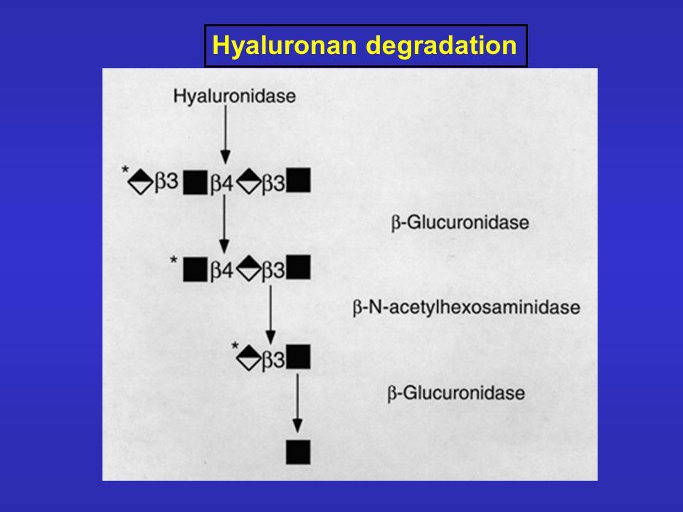 Hyaluronan degradation
