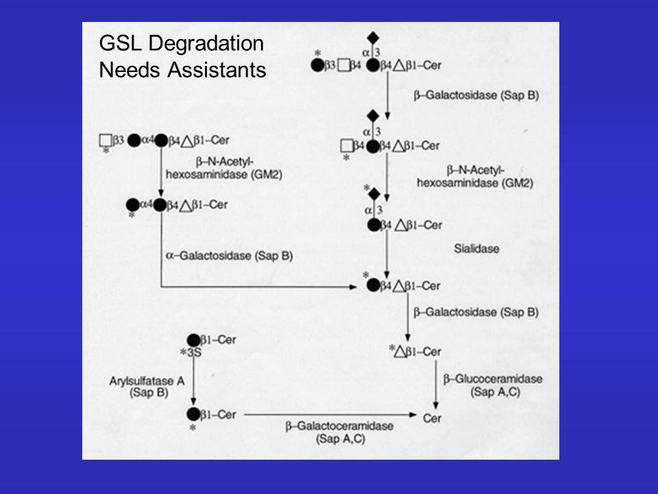 GSL Degradation Needs Assistants