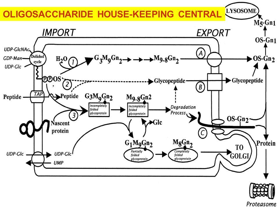 OLIGOSACCHARIDE HOUSE-KEEPING CENTRAL