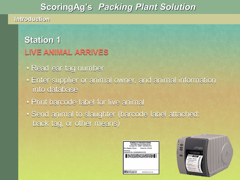 Introduction Station 1 LIVE ANIMAL ARRIVES ScoringAgs Packing Plant Solution Read ear tag number Enter supplier or animal owner, and animal information into database Print barcode label for live animal Send animal to slaughter (barcode label attached: back tag, or other means)