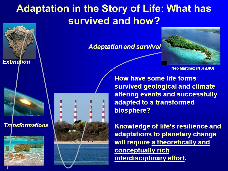 Adaptation in the Story of Life: What has survived and how? How have some life forms survived geological and climate altering events and successfully