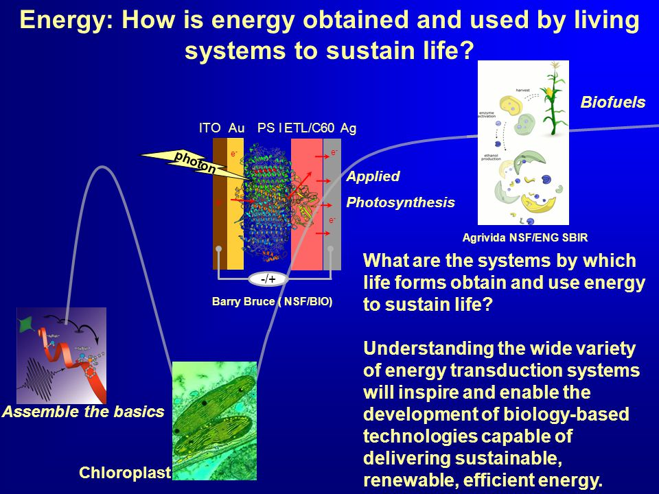 PS IETL/C60AuAgITO -/+ photon e-e- e-e- e-e- e-e- Energy: How is energy obtained and used by living systems to sustain life.
