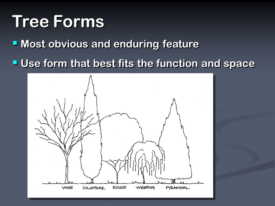 Tree Forms Most obvious and enduring feature Use form that best fits the function and space Tree Forms Most obvious and enduring feature Use form that