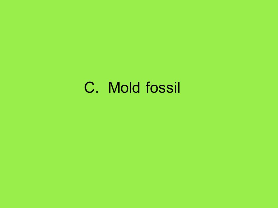 C. Mold fossil
