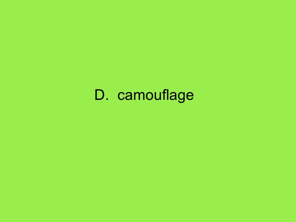D. camouflage