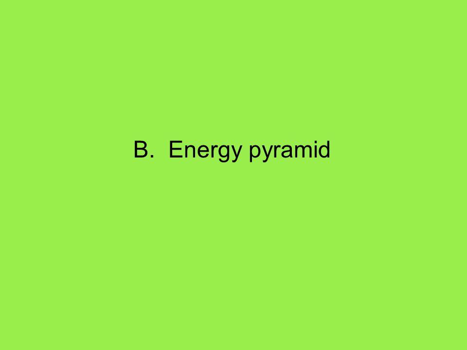 B. Energy pyramid